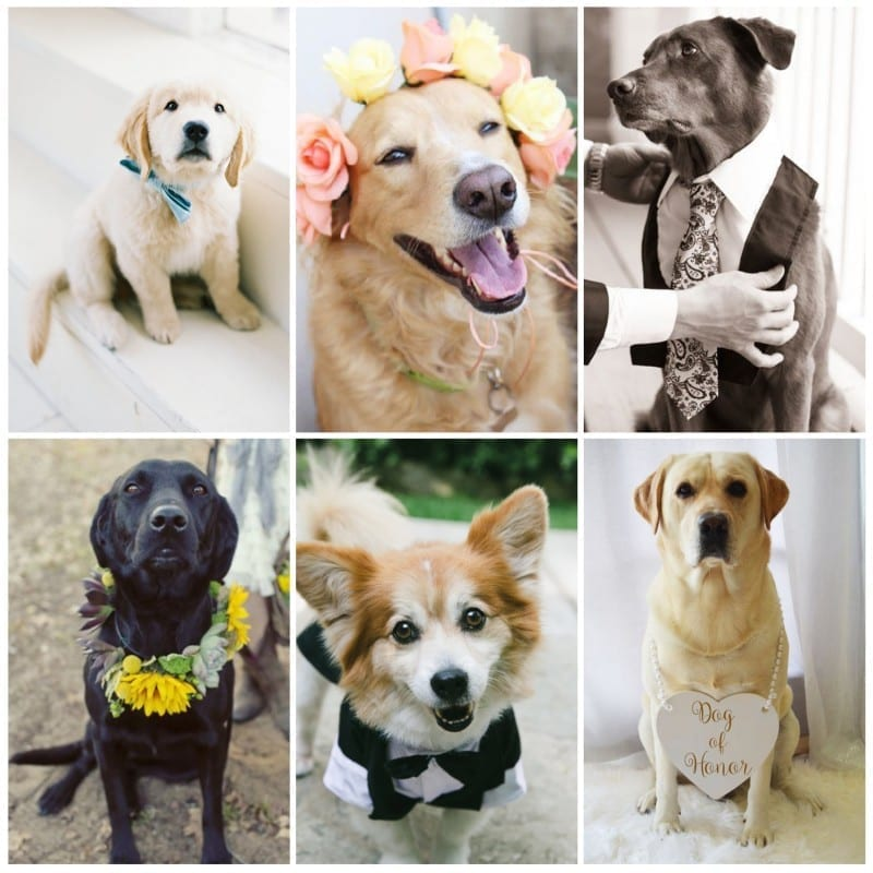 Sunday Inspiration: 30 cute ways to include your dog at your wedding